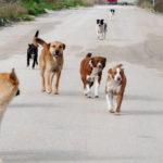 10 milioni di euro per i comuni in dissesto,  si finanziano i rifugi per cani randagi